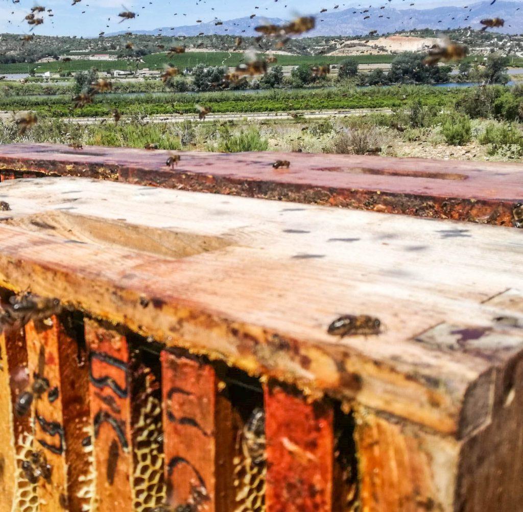 Miel de Azahar en les Terres de l'Ebre