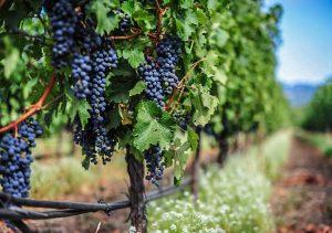 Vinos DOCa Rioja